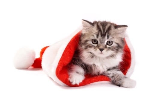Christmas-Cat in Hat-Wallpaper