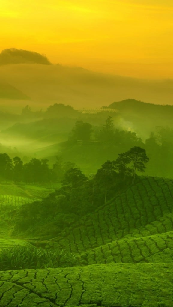 Malaysia-Highlands background