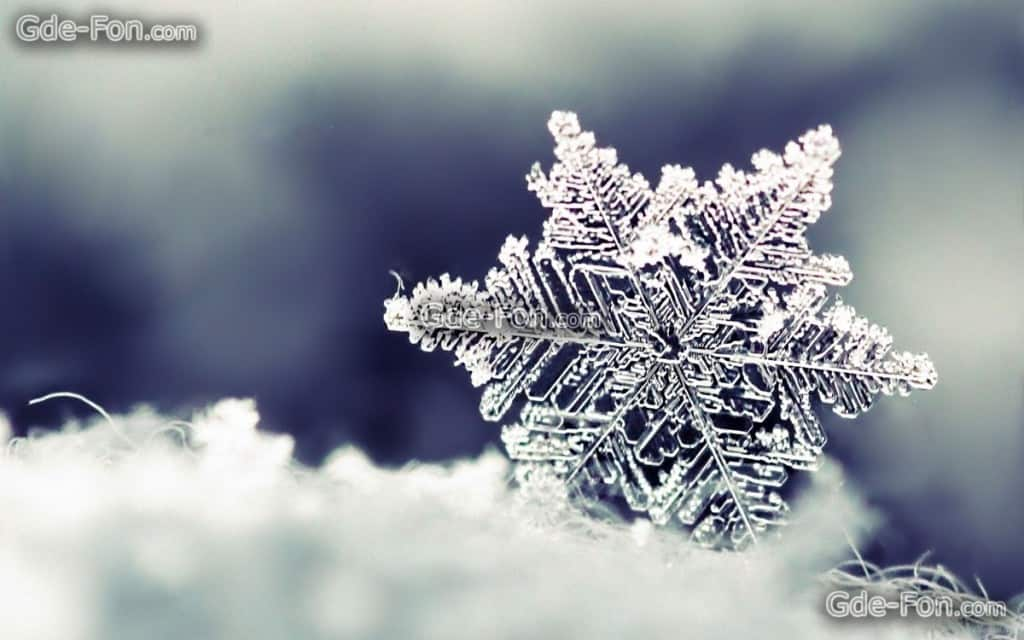 close up snow flake