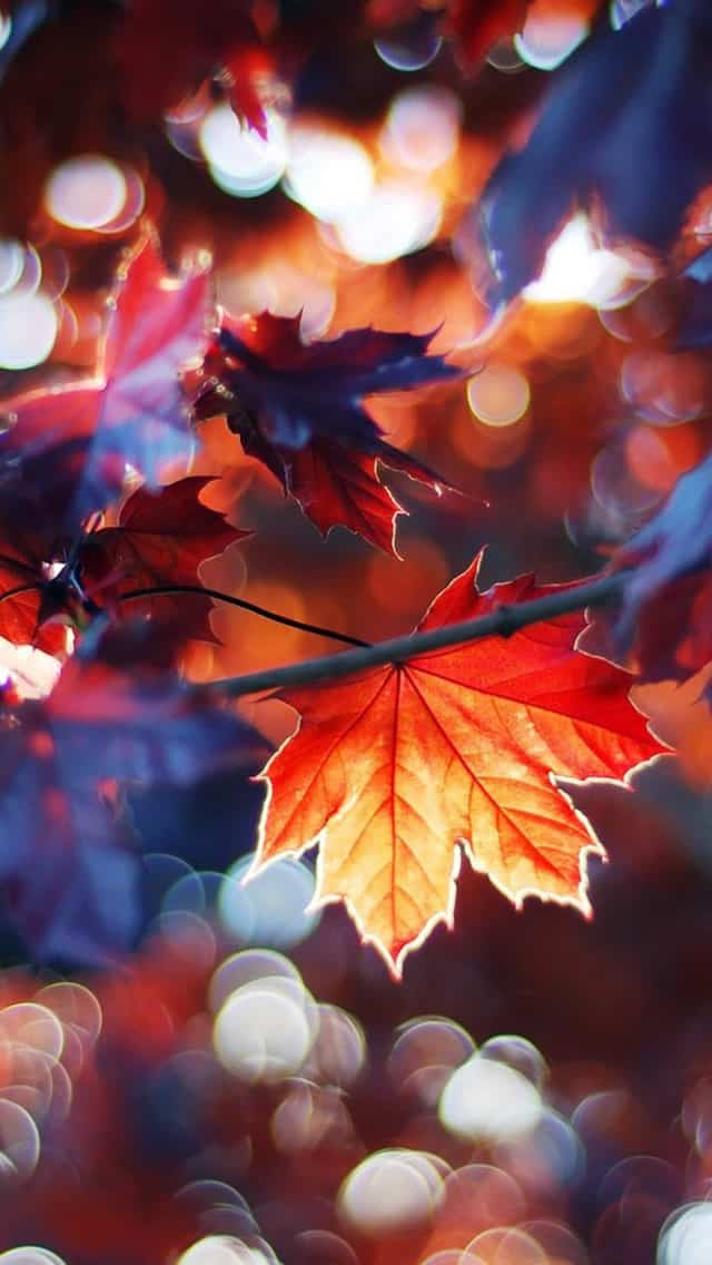 21 Creative Autumn Wallpapers 85ideas Com