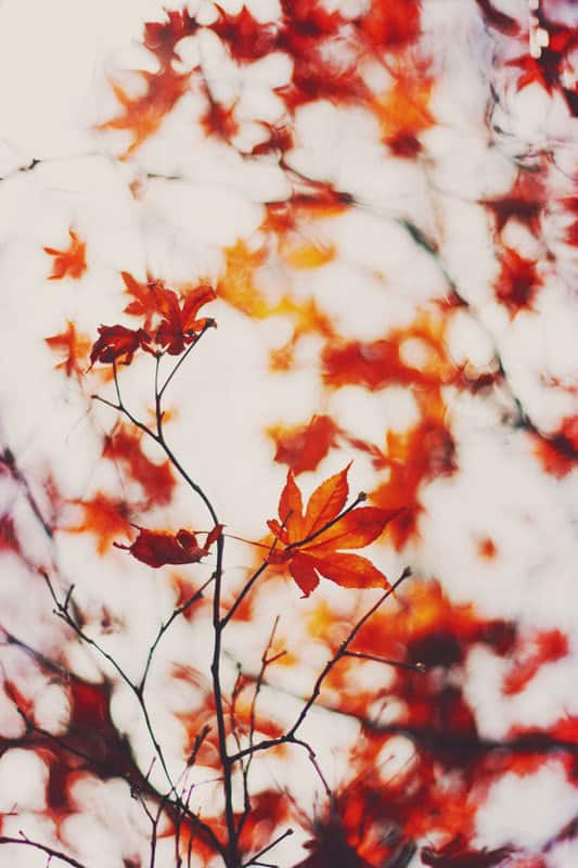 wallpaper autumn creative - photo #10