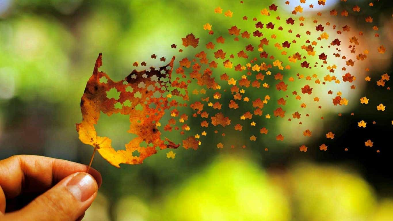 creative_broken_autumn_leaf