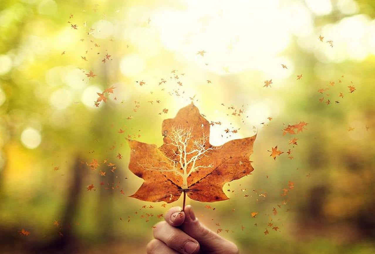 fly_away_leaves_leaf_autumn_wallpaper