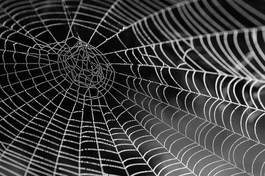 Internal-linking-domain authority